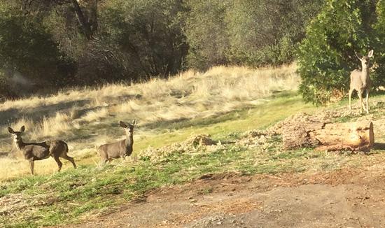 Deer in the garden of Frontier Hill