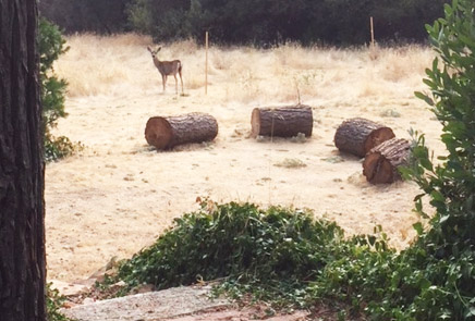 See the deer in Mariposa Yosemite vacation rental cottage for a fine self-catering holiday